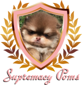 Supremacy Poms